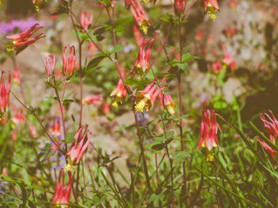 Gardens & Pest Control